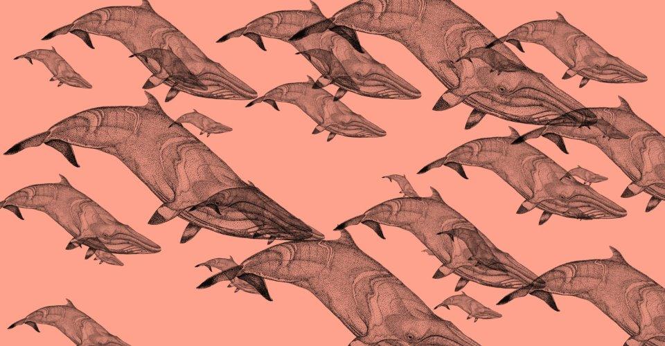 cetaceos